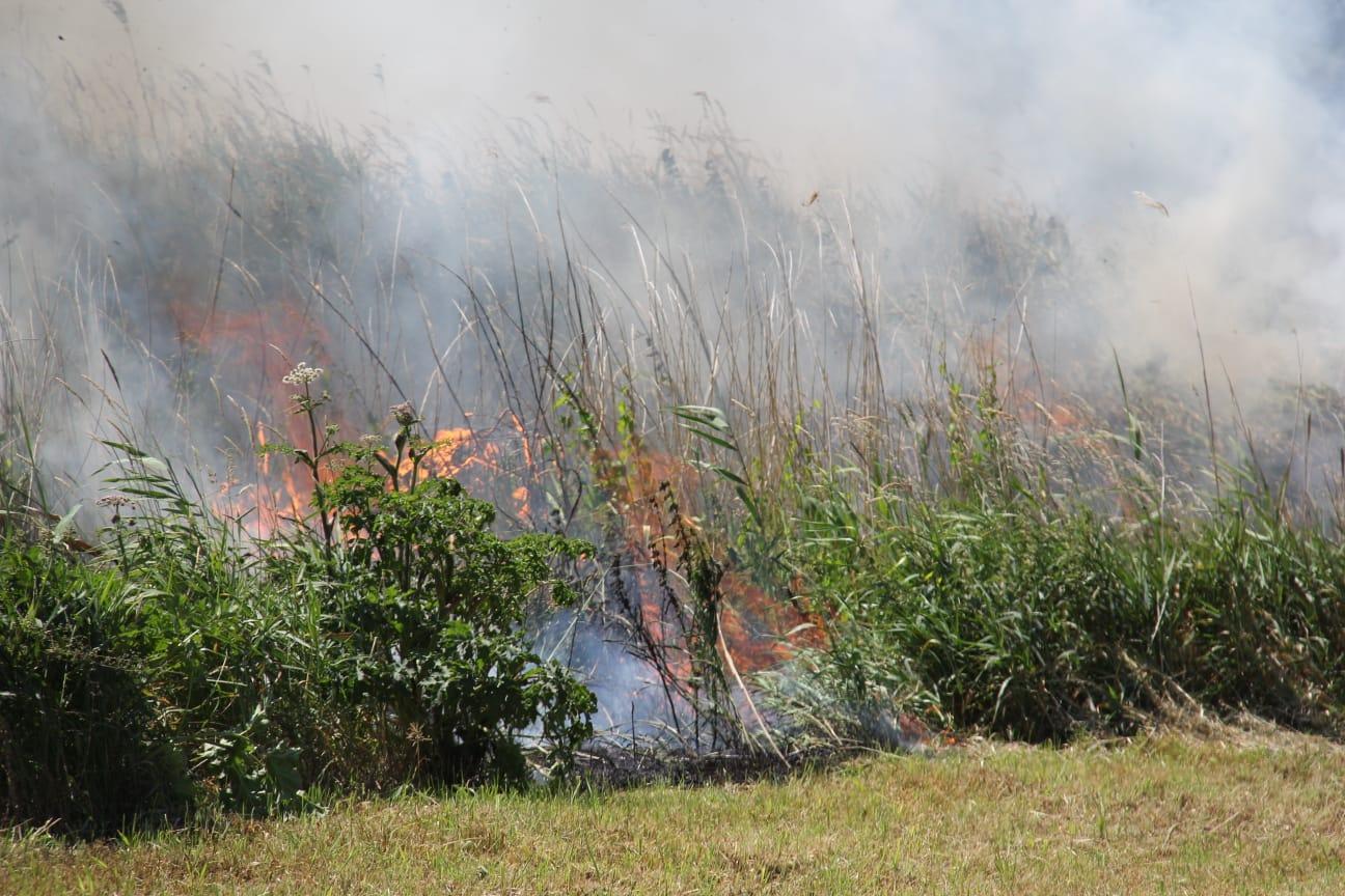 Flinke Rookontwikkeling bij natuur brand in Giethoorn