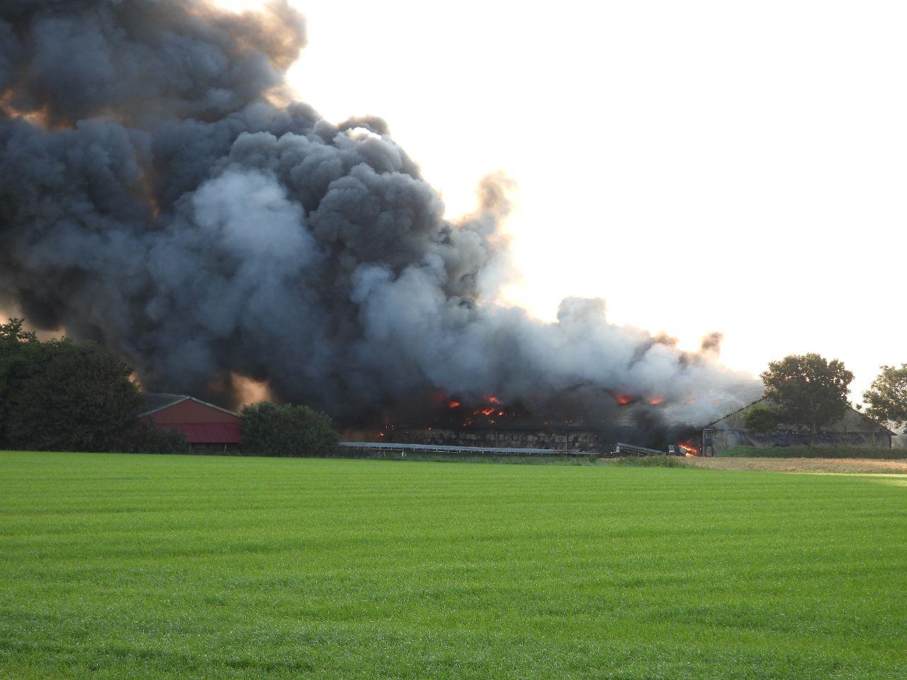 Duizende kippen omgekomen na grote brand