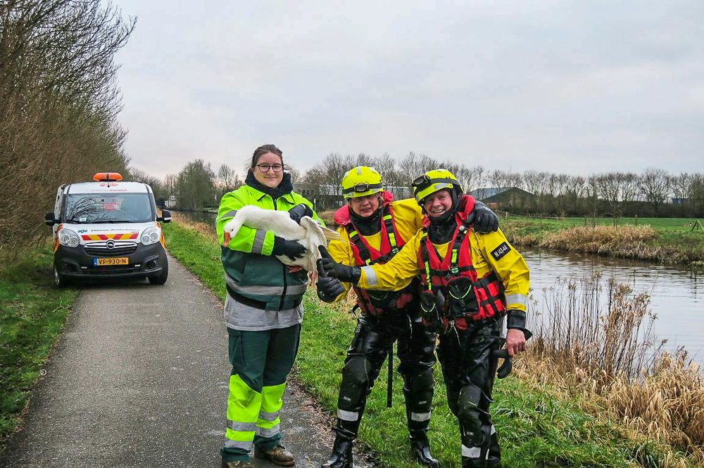 oppervlakte redders van de brandweer redt gewonde gans in het kanaal bij Terwispel