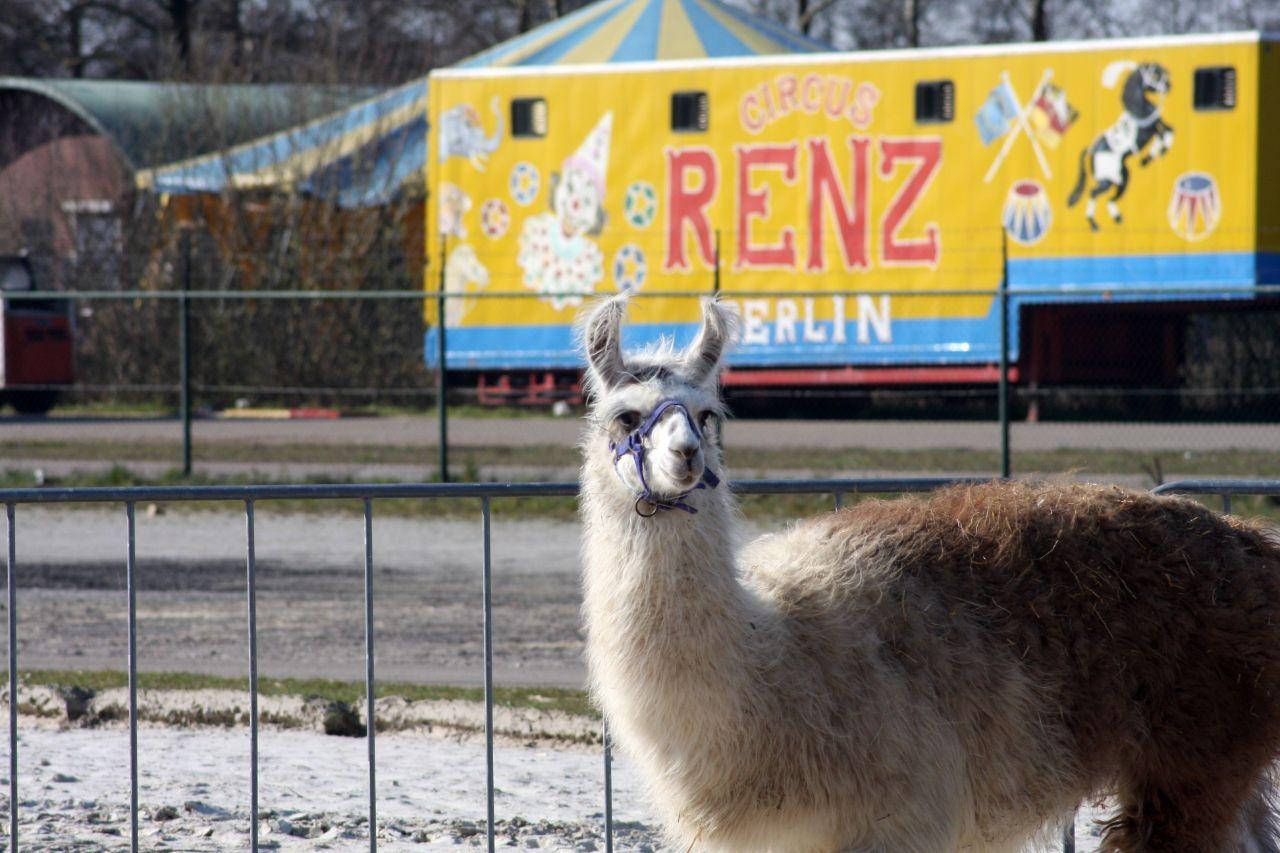 Circus Renz zoekt dringend op zoek naar hulp