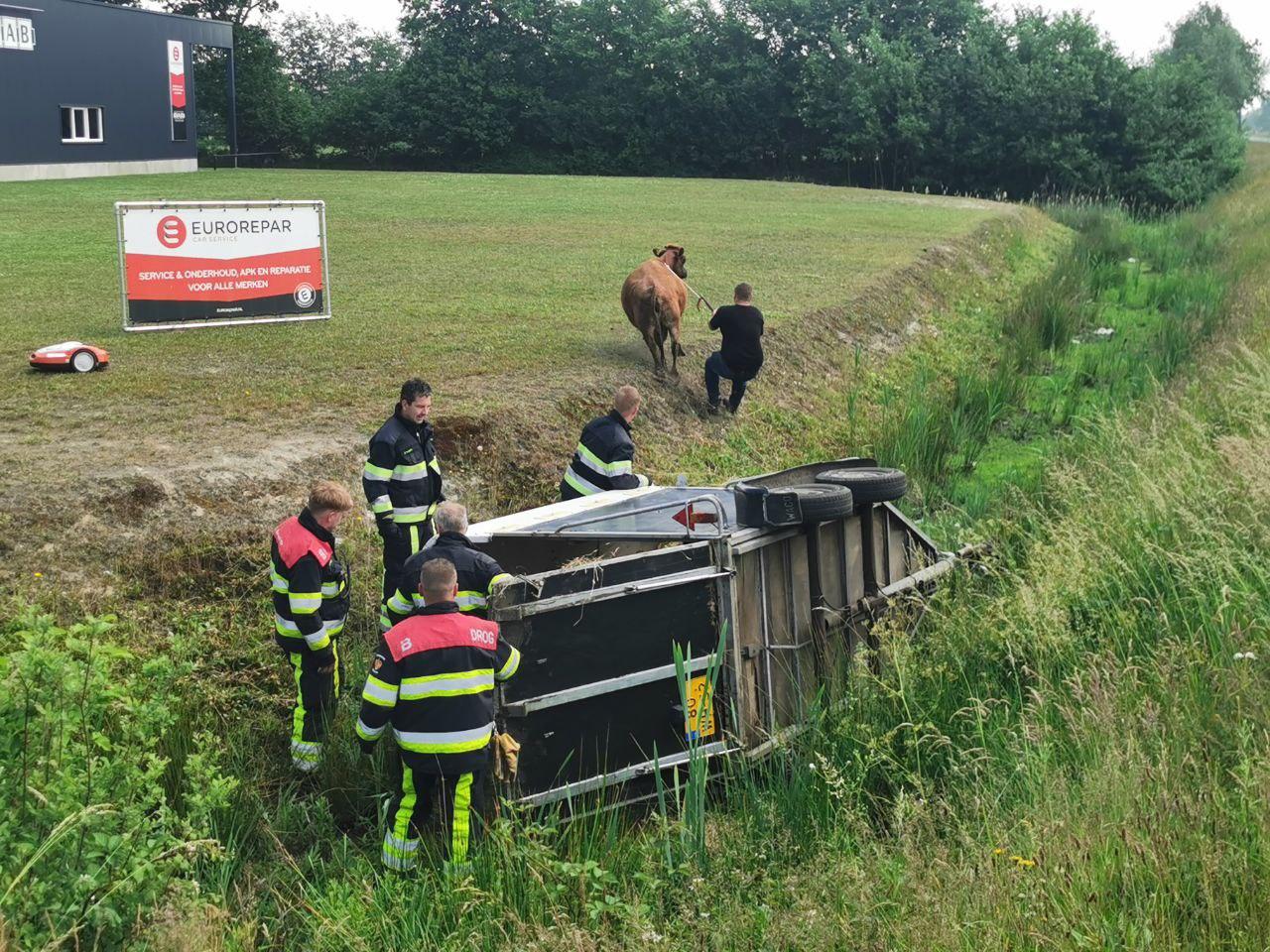 Paardentrailer met koe raakt in de sloot bij Drogeham