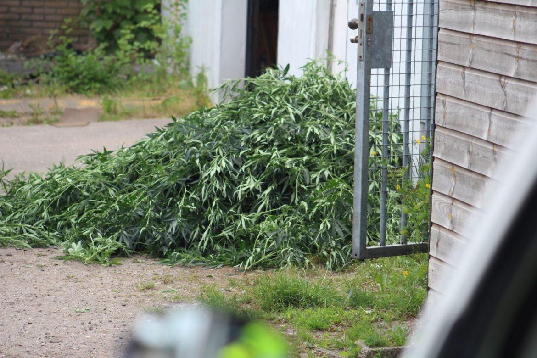 Politie doet inval in rijtjeswoning in de wijk de Trisken en stuit op hennepkwekerij in Drachten
